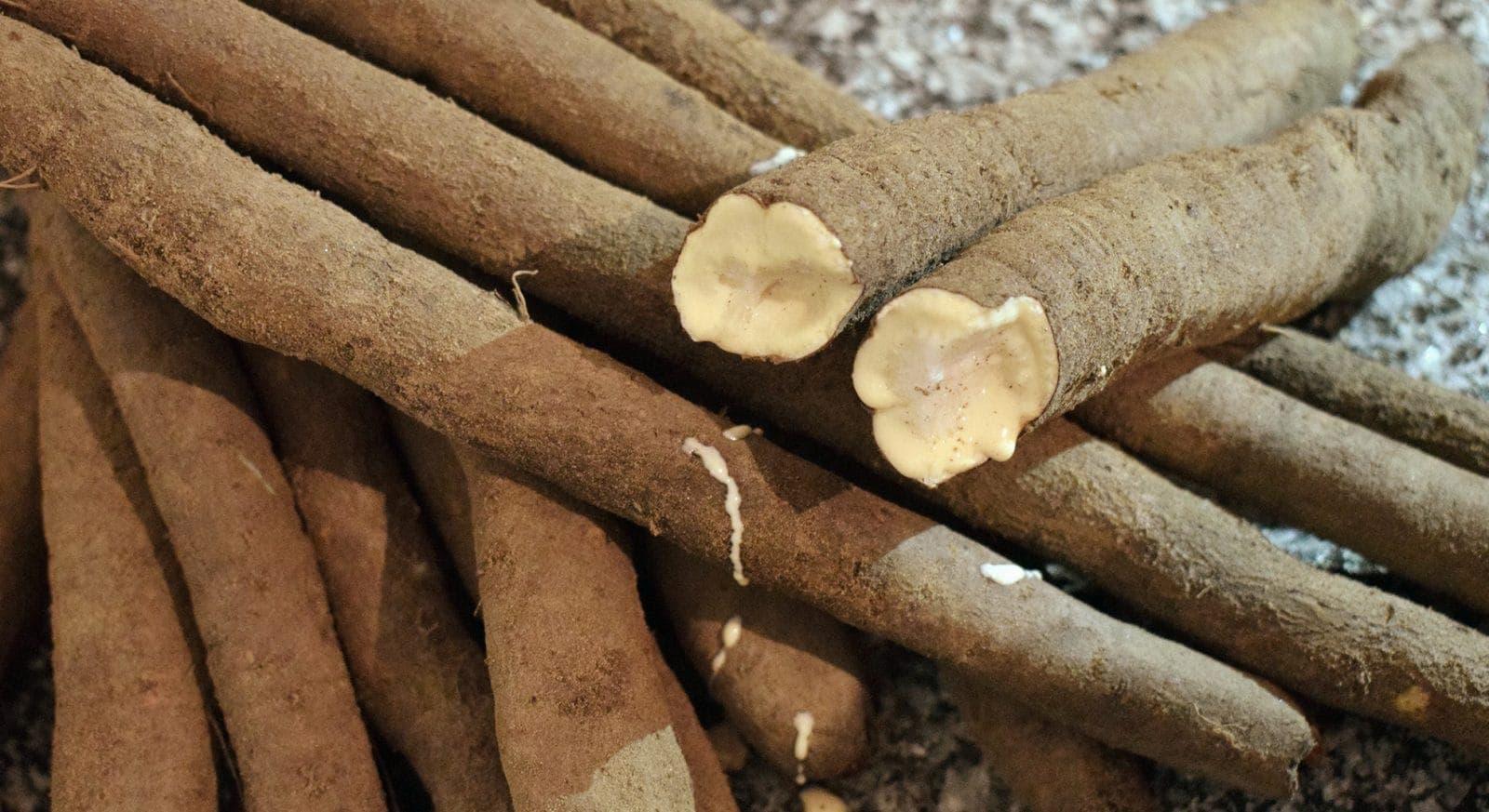 Schwarzwurzel, Spanische Schwarzwurzel oder Winterspargel: Produkt des Monats ~ FLOW THE KITCHEN