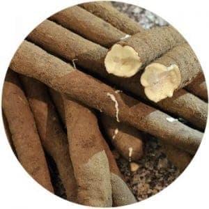 Rezept: Schwarzwurzel, Spanische Schwarzwurzel oder Winterspargel Schwarzwurzel Nüsslisalat